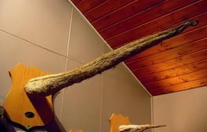 Walpenis, Isländisches Phallusmuseum, Reykjavík (© Richard Gould CC BY 2.0)